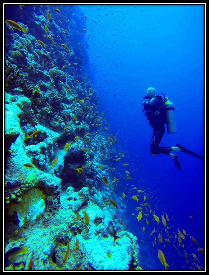 Gasteplads med mulighed for verdensklasse dykning
